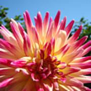 Floral Art Pink Yellow Dahlia Flower Baslee Troutman Art Print