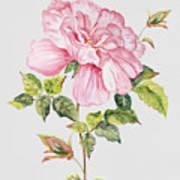 Floral Botanicals-jp3779 Art Print