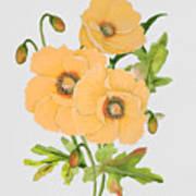 Floral Botanicals-jp3785 Art Print