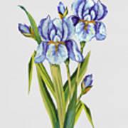 Floral Botanicals-jp3786 Art Print
