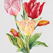 Floral Botanicals-jp3788 Art Print