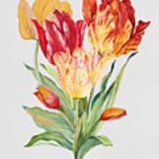 Floral Botanicals-jp3789 Art Print