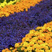 Floral Carpet Art Print
