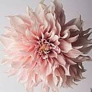 Floral Elegance Art Print