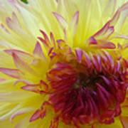 Floral Fine Art Dahlia Flower Yellow Red Prints Baslee Troutman Art Print