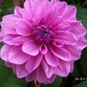 Floral In Pink Art Print