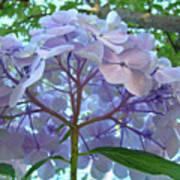 Floral Landscape Blue Hydrangea Flowers Baslee Troutman Art Print