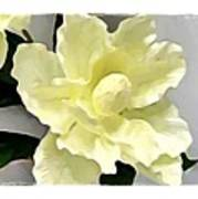 Floral Series I Art Print