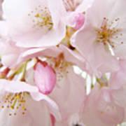 Floral Soft Pink Blossoms Spring Art Baslee Troutman Art Print