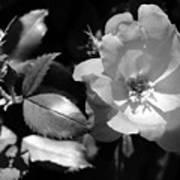 Floral Spotlight  Art Print