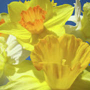 Floral Spring Garden Art Prints Yellow Daffodils Flowers Baslee Troutman Art Print