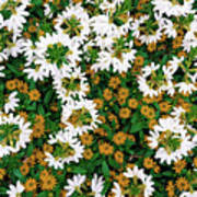 Floral Texture In The Summer Art Print