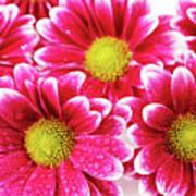 Floral Wallpaper Art Print