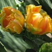 Flores De Cactus Art Print