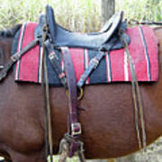 Florida Cracker Saddle Art Print