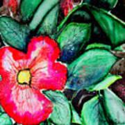 Florida Flower Art Print