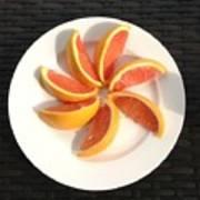 Florida Fruit Art Print