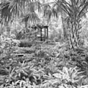 Florida Garden Scene_009 Art Print