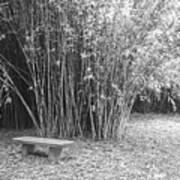 Florida Garden Scene_010 Art Print