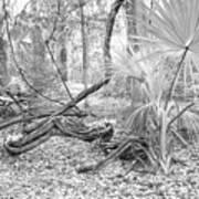 Florida Garden Scene_012 Art Print