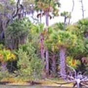 Florida Greens Art Print