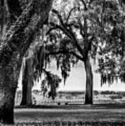 Florida Interior From Bok Gardens Art Print