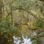 Florida Jungle Art Print