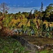 Florida Lands 6 Art Print