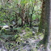 Florida Landscape - Lithia Springs Art Print