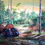 Florida Osceola Turkeys- The Two Kings Art Print