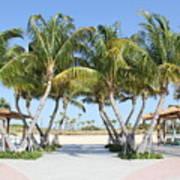 Florida Palms At Beach Art Print