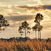 Florida Pine Landscape By H H Photography Of Florida Art Print