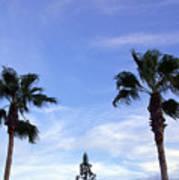 Florida Queen Palm   Art Print