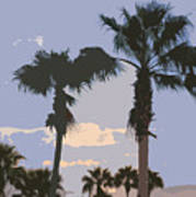 Florida Queen Palm Trees   Art Print