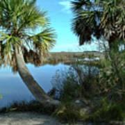 Florida Shade Trees Art Print