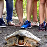 Florida Softshell Turtle 003 Art Print