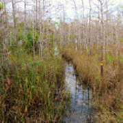 Florida Trail Big Cypress Art Print