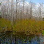 Florida Wilderness Art Print
