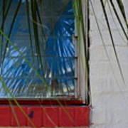 Florida Window Art Print
