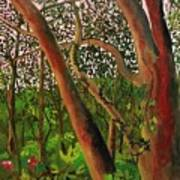 Florida Woodlands Art Print