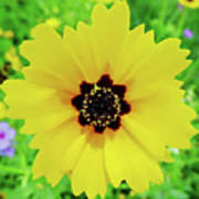 Florida - Yellow - Wildflower Art Print