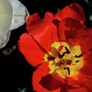 Flower 55 Art Print