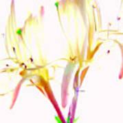 Flower 9315 Art Print