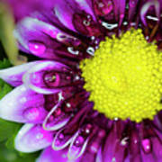 Flower And Droplets Art Print