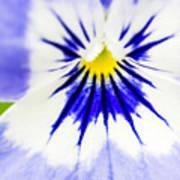 Flower Blossom 1 Art Print