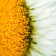 Flower Blossom 2 Art Print