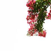 Flower Branch Art Print