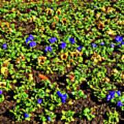 Flower Carpet. Sochi Arboretum. Art Print