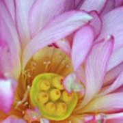 Flower Center Art Print