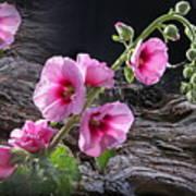 Flower Country Art Print